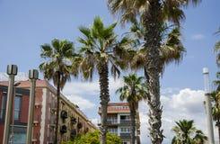 Palmeiras contra um céu azul e uma construção com as nuvens finas em Barcelona, Espanha Dia ensolarado azul bonito Palma da árvor Imagens de Stock