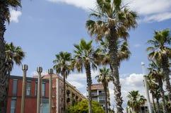 Palmeiras contra um céu azul e uma construção com as nuvens finas em Barcelona, Espanha Dia ensolarado azul bonito Palma da árvor Fotografia de Stock