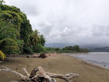 Palmeiras da praia em Costa-Rica Imagens de Stock Royalty Free