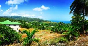 Palmeiras da propriedade e da skyline da vista para o mar de Barbados fotografia de stock