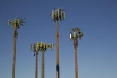 Palmeiras da torre da pilha Imagem de Stock