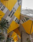 Palmeiras das casas do cubo de Rotterdam fotos de stock royalty free