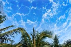 Palmeiras de encontro ao céu azul Fotografia de Stock Royalty Free