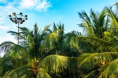 Palmeiras de encontro ao céu azul Foto de Stock Royalty Free