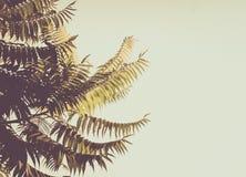 Palmeiras de encontro ao céu azul fundo bonito simples Fotos de Stock Royalty Free