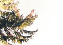 Palmeiras de encontro ao céu azul fundo bonito simples Imagem de Stock