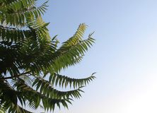Palmeiras de encontro ao céu azul fundo bonito simples Fotos de Stock