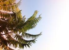 Palmeiras de encontro ao céu azul fundo bonito simples imagens de stock