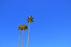 Palmeiras de encontro a um céu azul Foto de Stock