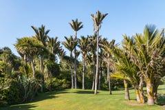 Palmeiras de Nikau que crescem na floresta úmida tropical na costa oeste, Nova Zelândia imagens de stock royalty free