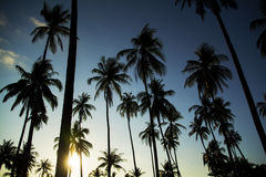 Palmeiras de Sun da tarde Imagens de Stock Royalty Free