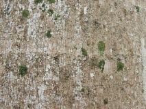 Palmeiras de superfície da garrafa Foto de Stock Royalty Free