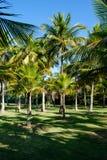 Palmeiras de vários tamanhos em um parque no dia ensolarado em Rio de janeiro Sombras no primeiro plano, e um céu azul profundo Foto de Stock