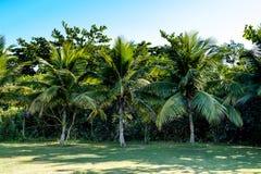 Palmeiras de vários tamanhos em um parque no dia ensolarado em Rio de janeiro Sombras no primeiro plano, e um céu azul profundo Imagem de Stock