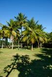 Palmeiras de vários tamanhos em um parque no dia ensolarado em Rio de janeiro Sombras no primeiro plano, e um céu azul profundo Imagens de Stock