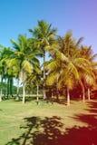 Palmeiras de vários tamanhos em um parque no dia ensolarado em Rio de janeiro Sombras no primeiro plano, e um céu azul profundo R Imagens de Stock Royalty Free
