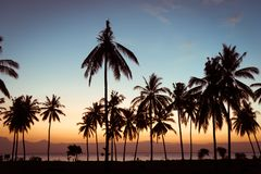 Palmeiras do coco da silhueta na praia no por do sol Fotografia de Stock