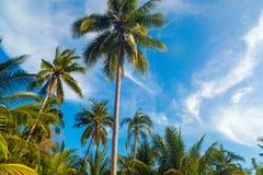 Palmeiras do coco, fundo tropical bonito, em ensolarado azul Imagens de Stock Royalty Free