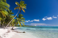 Palmeiras do coco no Sandy Beach branco na ilha de Saona, República Dominicana Imagem de Stock