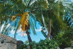 Palmeiras do verde do coco sob o sol, fundo bonito ex?tico tropical ver?o, feriados, recurso luxuoso, f?rias do turismo fotografia de stock royalty free