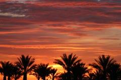 Palmeiras durante o nascer do sol de Las Vegas Imagem de Stock