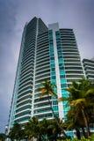 Palmeiras e arranha-céus na praia sul, Miami Beach, Florida Fotografia de Stock