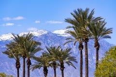 Palmeiras e as montanhas cobertos de neve de San Jacinto, Palm Springs, Coachella Valley, Califórnia imagem de stock