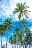 Palmeiras e céu azul Vista fascinante fotos de stock royalty free