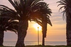Palmeiras e céu brilhante com por do sol bonito fotos de stock royalty free
