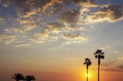 Palmeiras e céu colorido com por do sol bonito imagens de stock