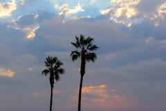 Palmeiras e céu dramático com por do sol bonito imagens de stock