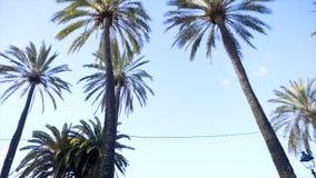Palmeiras e céu estoque Palmeiras no parque da cidade Palmeira no dia de verão Fundo do conceito do curso do verão imagem de stock royalty free