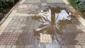 Palmeiras e céu Refrlection em uma poça em um dia chuvoso, Israel da rua fotos de stock royalty free