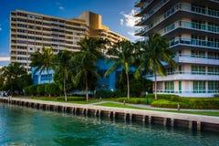 Palmeiras e construções em Belle Isle, em Miami Beach, Florida imagem de stock royalty free