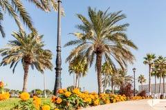 Palmeiras e flores ao longo da passagem pedestre no Doha, a capital de Catar foto de stock royalty free