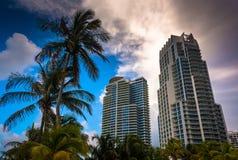 Palmeiras e highrises na praia sul, Miami, Florida Foto de Stock Royalty Free
