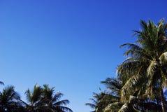 Palmeiras e nuvens azuis do céu e as brancas Imagens de Stock Royalty Free