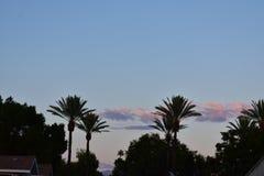 Palmeiras e nuvens em Califórnia Foto de Stock