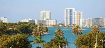Palmeiras e a skyline de Miami Imagens de Stock Royalty Free