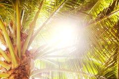 Palmeiras e sol amarelo em um céu Imagens de Stock Royalty Free