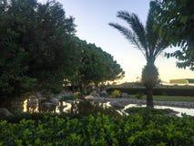 Palmeiras e uma lagoa fotografia de stock