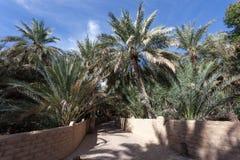 Palmeiras em Al Ain Oasis fotos de stock