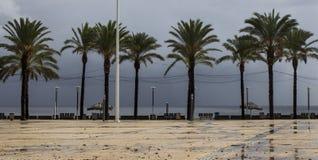 Palmeiras em Machico na ilha de Madeira Imagens de Stock