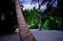 Palmeiras em Maldivas Fotos de Stock
