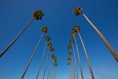 Palmeiras em seguido Califórnia típica de Los Angeles do LA fotografia de stock royalty free