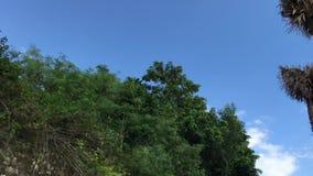 Palmeiras em um fundo do céu Conduzindo o 'trotinette' Capturado do velomotor com stadycam Ásia vídeos de arquivo