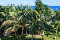 Palmeiras em um jardim tropical Céu azul e mar no fundo Imagem de Stock