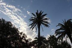 Palmeiras exóticas Fotos de Stock Royalty Free