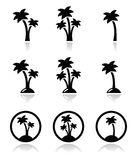 Palmeiras, feriados exóticos nos ícones da praia ajustados Foto de Stock Royalty Free