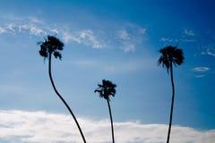 Palmeiras Long Beach Califórnia fotos de stock